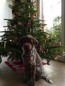 Luc Weihnachten 2015